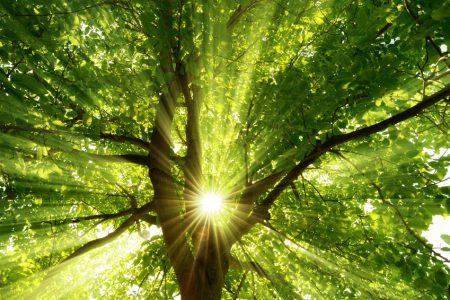 Die mittig platzierte Sonne strahlt effektvoll durch einen großen Baum
